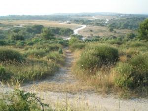 natuurgebied met heide